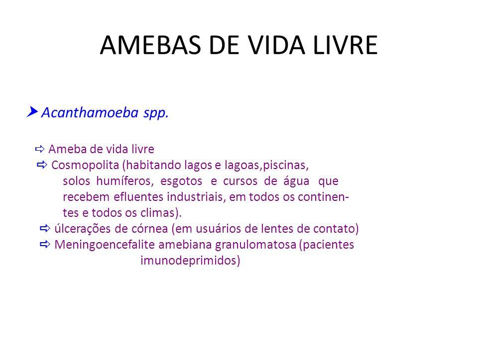 AMEBAS DE VIDA LIVRE Acanthamoeba spp. Ameba de vida livre Cosmopolita (habitando lagos e lagoas,piscinas, solos humíferos, esgotos e cursos de água q
