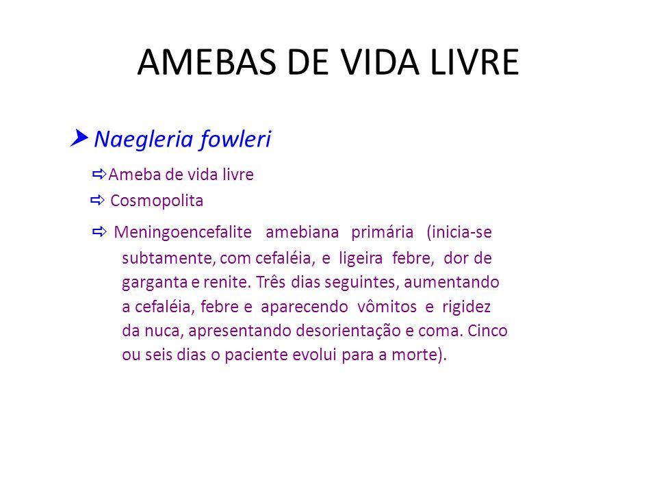 AMEBAS DE VIDA LIVRE Naegleria fowleri Ameba de vida livre Cosmopolita Meningoencefalite amebiana primária (inicia-se subtamente, com cefaléia, e lige