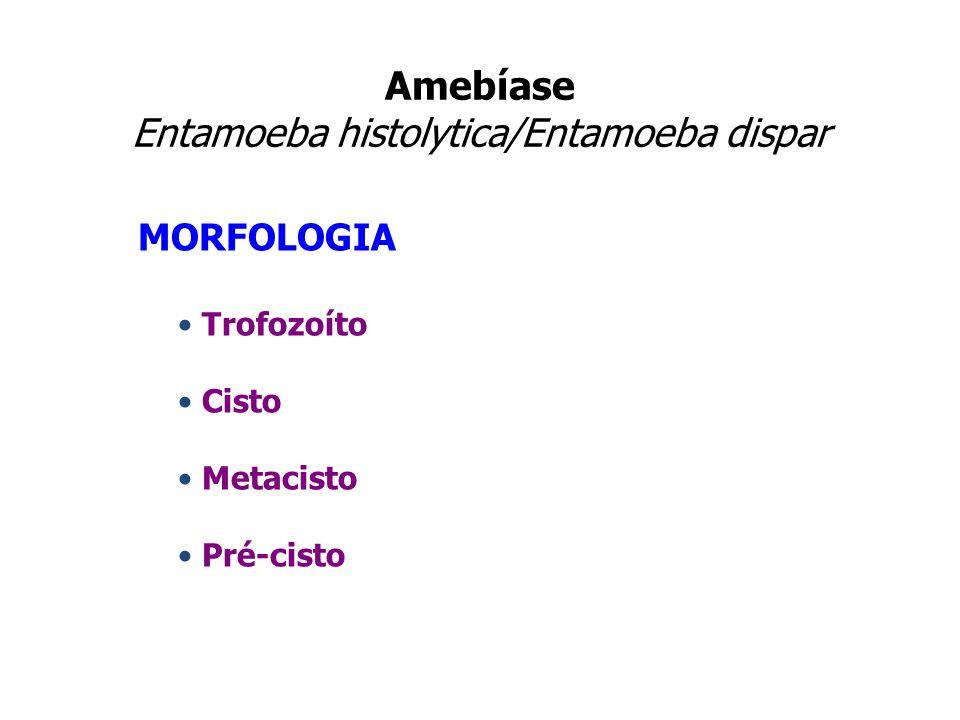 Amebíase Entamoeba histolytica/Entamoeba dispar MORFOLOGIA Trofozoíto Cisto Metacisto Pré-cisto
