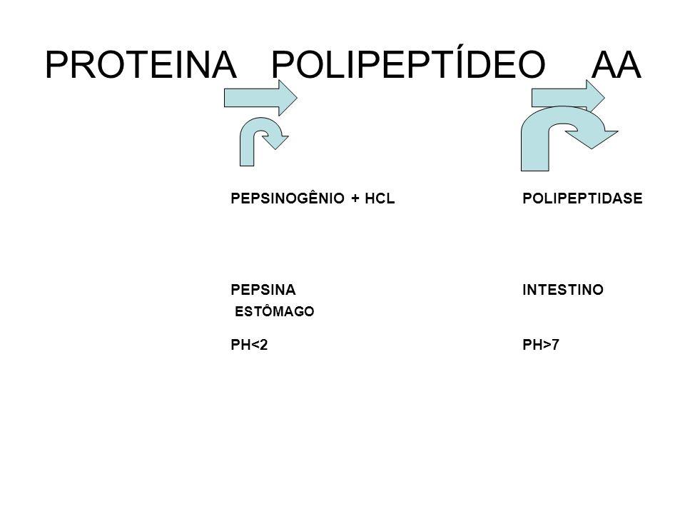 PROTEINA POLIPEPTÍDEO AA PEPSINOGÊNIO + HCL PEPSINA PH<2 POLIPEPTIDASE INTESTINO PH>7 ESTÔMAGO