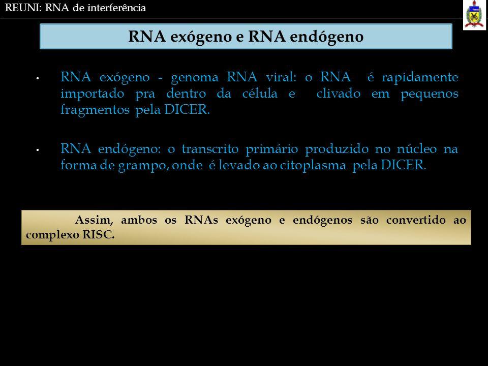 RNA exógeno - genoma RNA viral: o RNA é rapidamente importado pra dentro da célula e clivado em pequenos fragmentos pela DICER. RNA endógeno: o transc