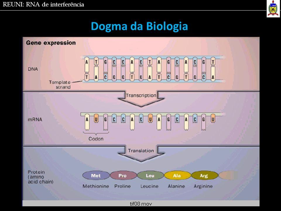 RNA de interferência é um fenômeno em que RNAds reprimem a síntese protéica pela degradação do RNAm.