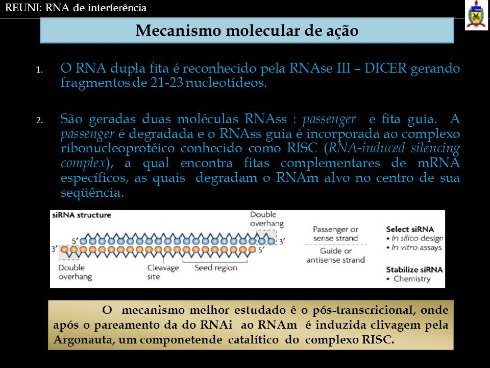 Mecanismo molecular de ação 1. O RNA dupla fita é reconhecido pela RNAse III – DICER gerando fragmentos de 21-23 nucleotídeos. 2. São geradas duas mol