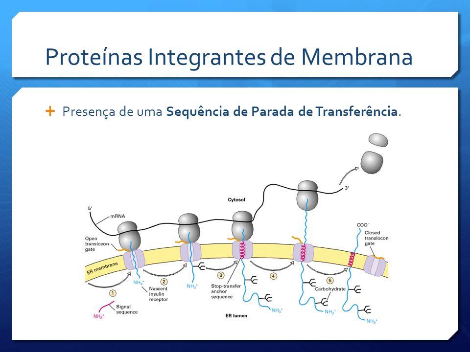 Proteínas Integrantes de Membrana Presença de uma Sequência de Parada de Transferência.