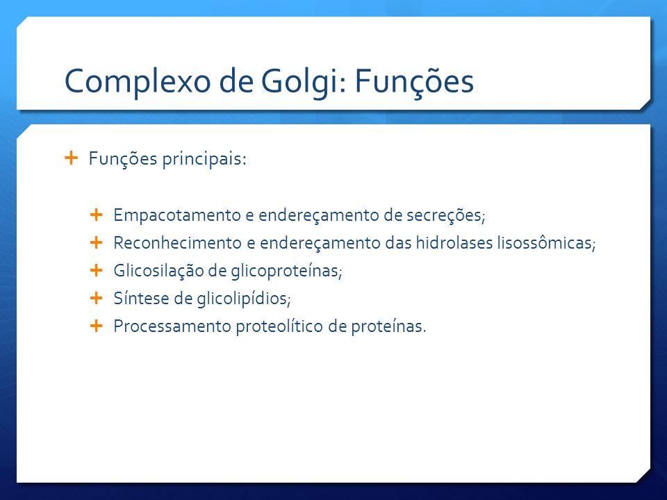 Complexo de Golgi: Funções Funções principais: Empacotamento e endereçamento de secreções; Reconhecimento e endereçamento das hidrolases lisossômicas; Glicosilação de glicoproteínas; Síntese de glicolipídios; Processamento proteolítico de proteínas.