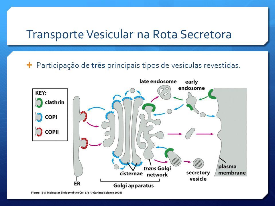 Transporte Vesicular na Rota Secretora Participação de três principais tipos de vesículas revestidas.