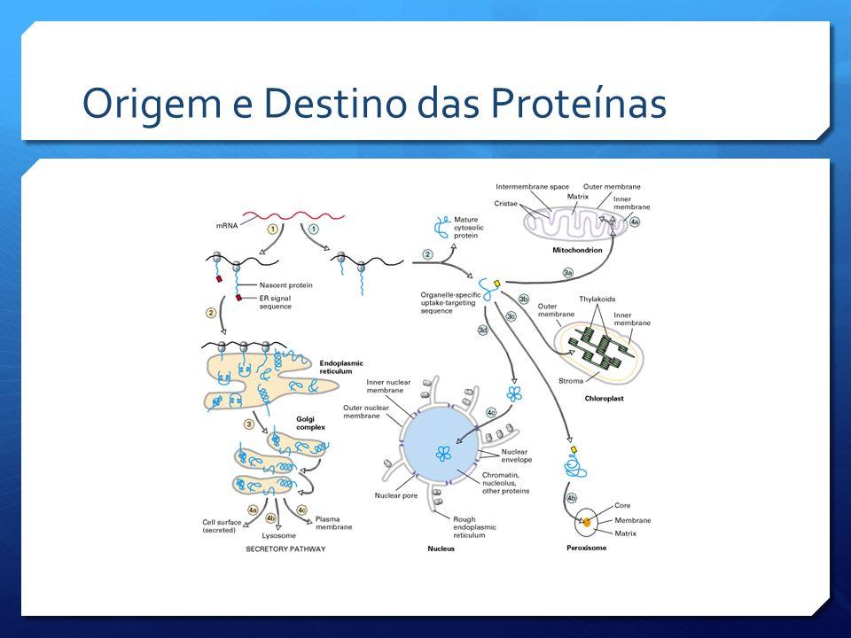 Origem e Destino das Proteínas