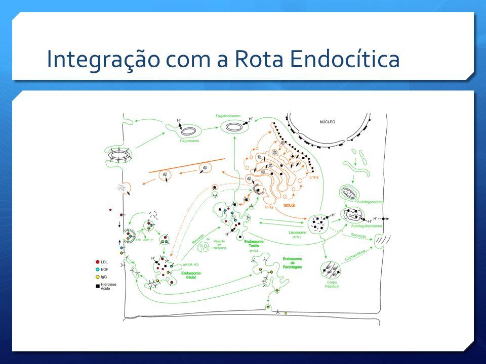 Integração com a Rota Endocítica