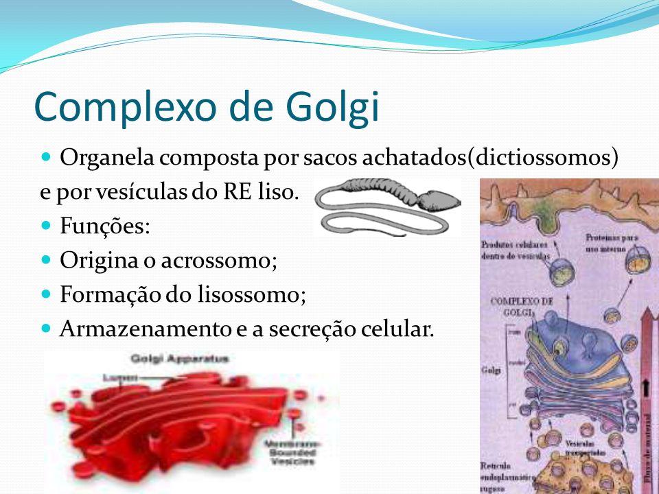 Complexo de Golgi Organela composta por sacos achatados(dictiossomos) e por vesículas do RE liso. Funções: Origina o acrossomo; Formação do lisossomo;
