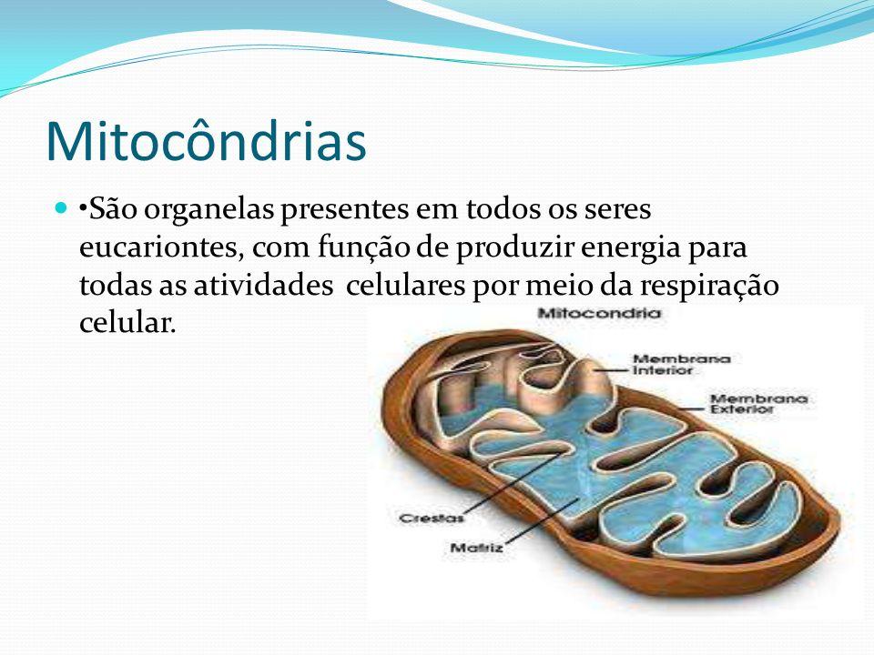 Mitocôndrias São organelas presentes em todos os seres eucariontes, com função de produzir energia para todas as atividades celulares por meio da resp