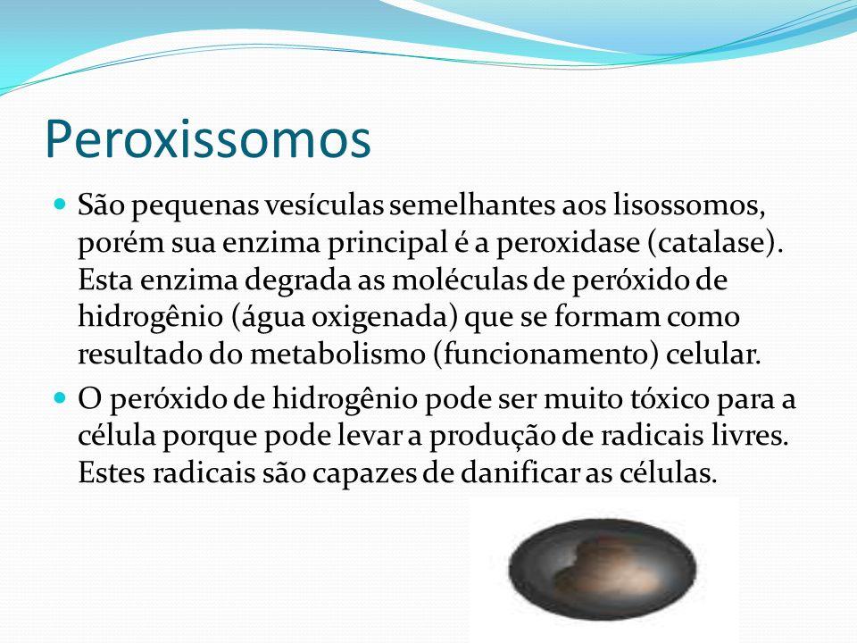 Peroxissomos São pequenas vesículas semelhantes aos lisossomos, porém sua enzima principal é a peroxidase (catalase). Esta enzima degrada as moléculas