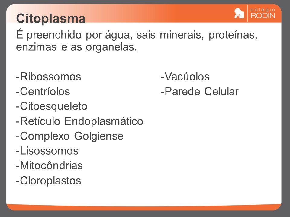Citoplasma É preenchido por água, sais minerais, proteínas, enzimas e as organelas. -Ribossomos-Vacúolos -Centríolos-Parede Celular -Citoesqueleto -Re