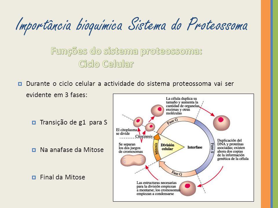 Durante o ciclo celular a actividade do sistema proteossoma vai ser evidente em 3 fases: Transição de g1 para S Na anafase da Mitose Final da Mitose