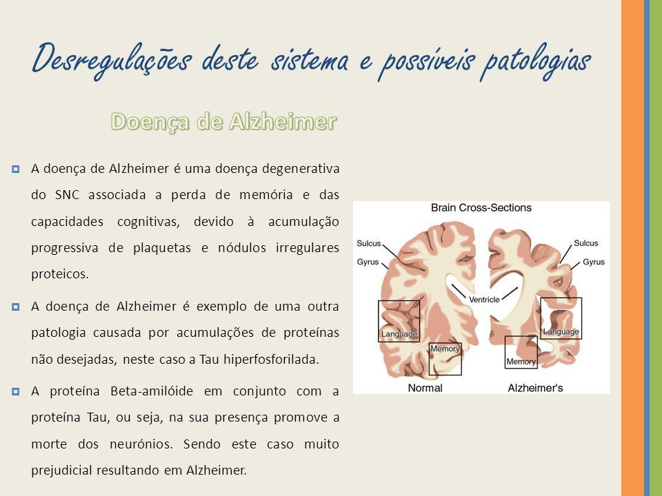 Desregulações deste sistema e possíveis patologias A doença de Alzheimer é uma doença degenerativa do SNC associada a perda de memória e das capacidad