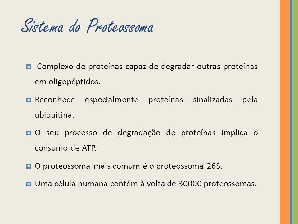 Proteína constituída por 76 aminoácidos.