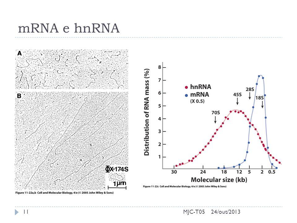 mRNA e hnRNA MJC-T0524/out/201311