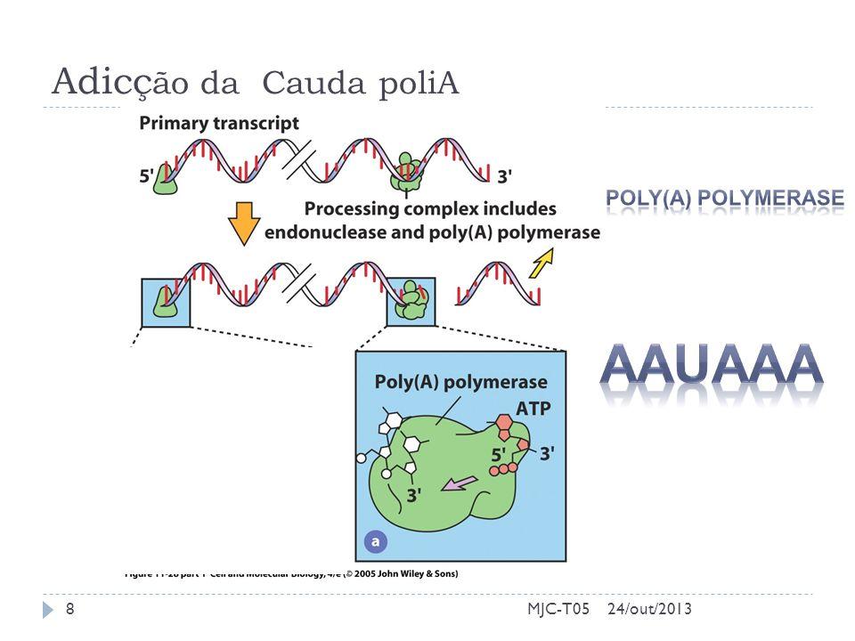 Adicç ão da Cauda poliA MJC-T0524/out/20138