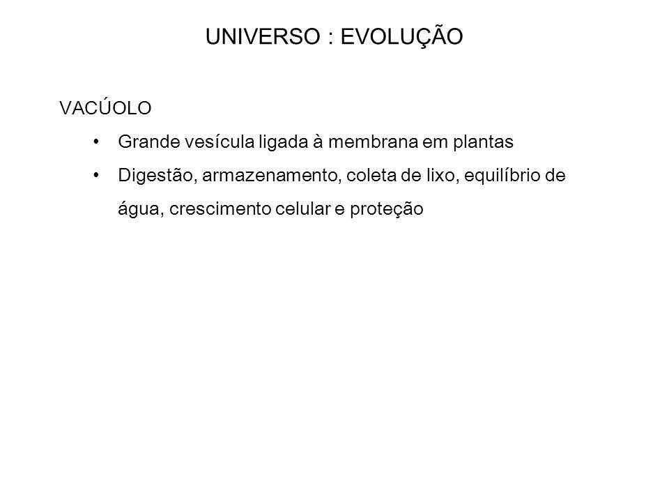 UNIVERSO : EVOLUÇÃO