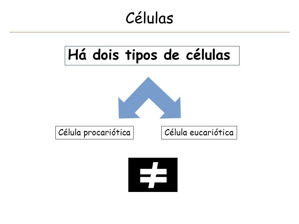 Células Há dois tipos de células Célula procarióticaCélula eucariótica
