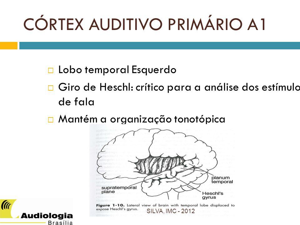 CÓRTEX AUDITIVO PRIMÁRIO A1 Lobo temporal Esquerdo Giro de Heschl: crítico para a análise dos estímulos de fala Mantém a organização tonotópica SILVA, IMC - 2012