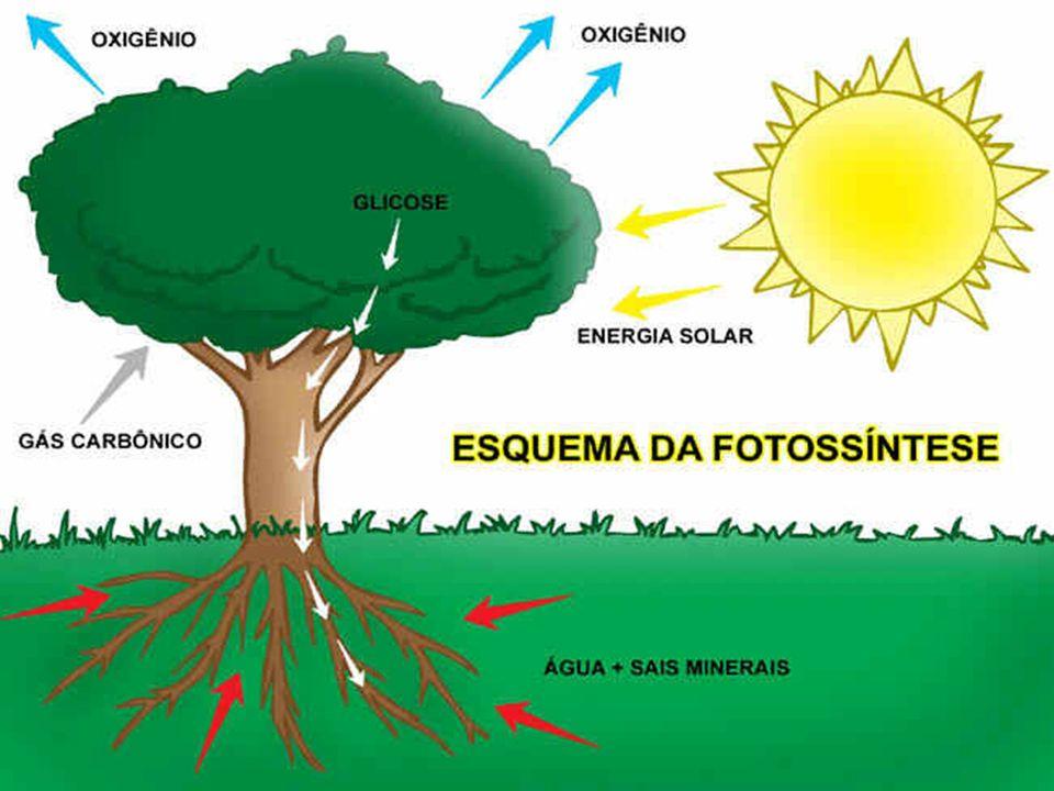 Vejam que interessante analogia: Na planta: as raízes são como os intestinos; a seiva é o sangue; as folhas são os pulmões as flores, os órgãos sexuais.
