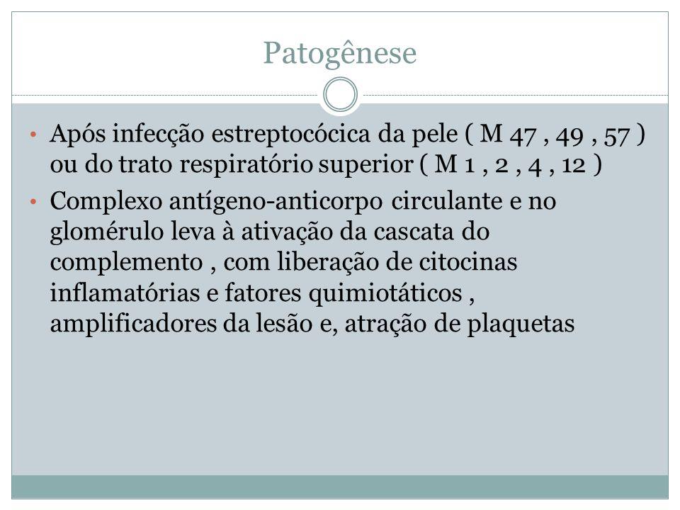 Patogênese Após infecção estreptocócica da pele ( M 47, 49, 57 ) ou do trato respiratório superior ( M 1, 2, 4, 12 ) Complexo antígeno-anticorpo circu