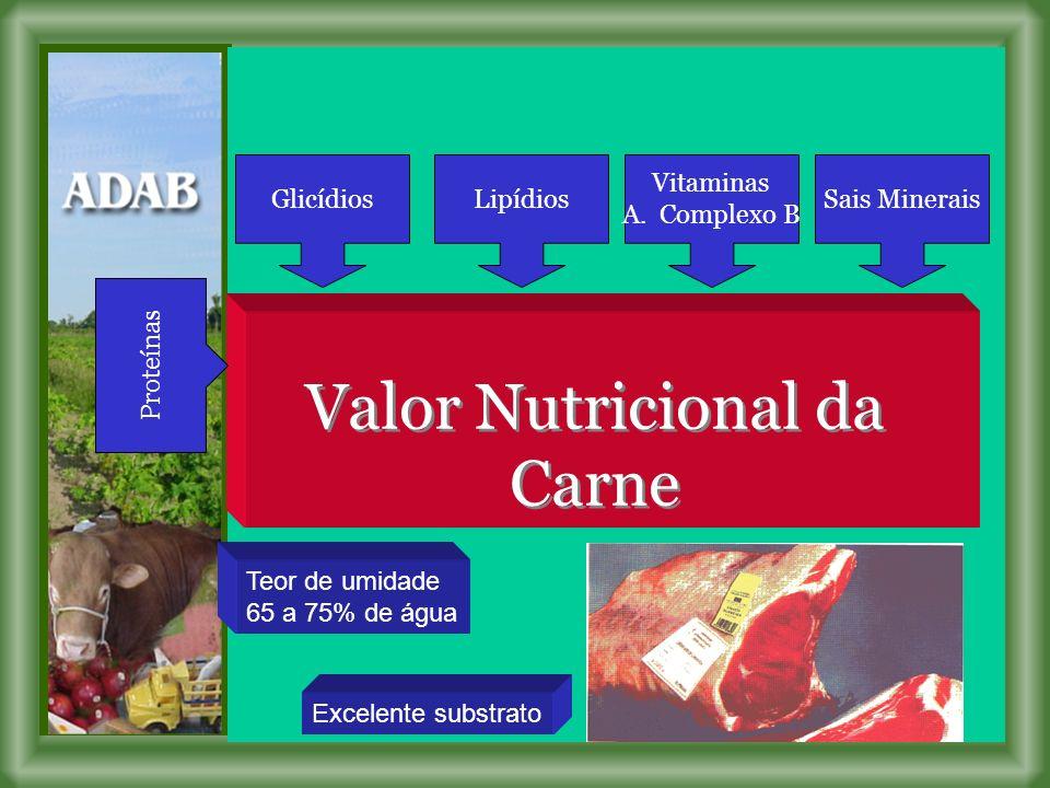 Proteínas GlicídiosLipídios Vitaminas A.
