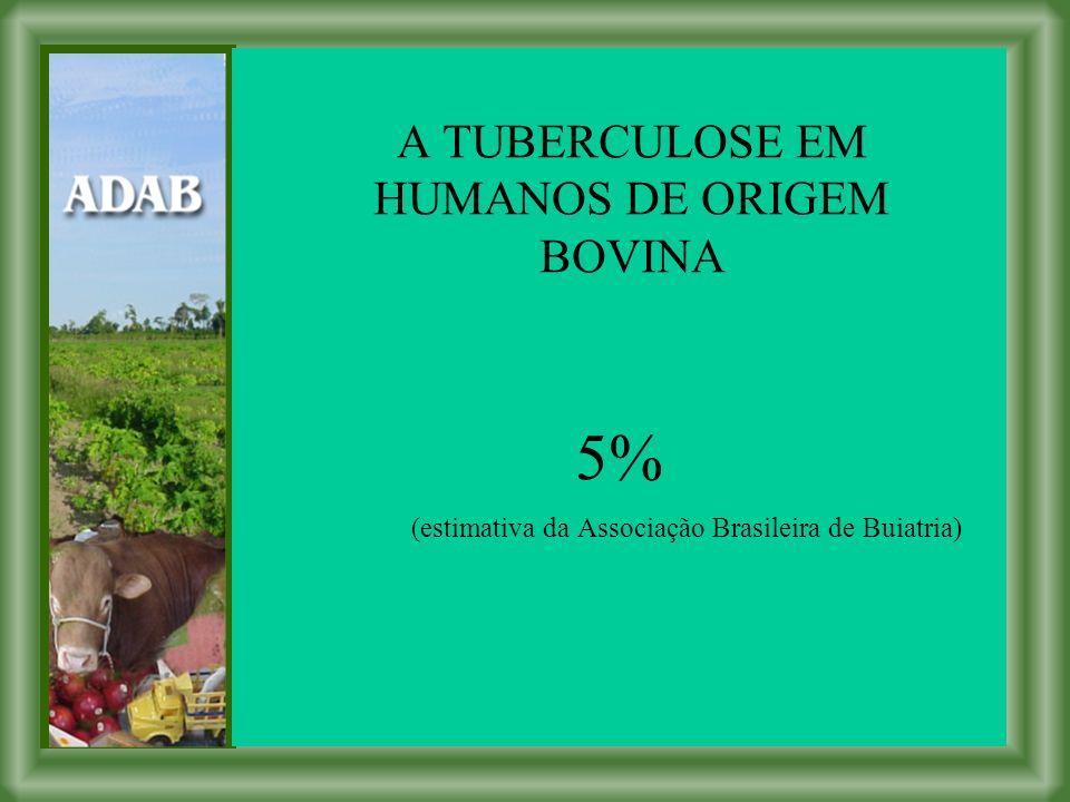 5% (estimativa da Associação Brasileira de Buiatria) A TUBERCULOSE EM HUMANOS DE ORIGEM BOVINA