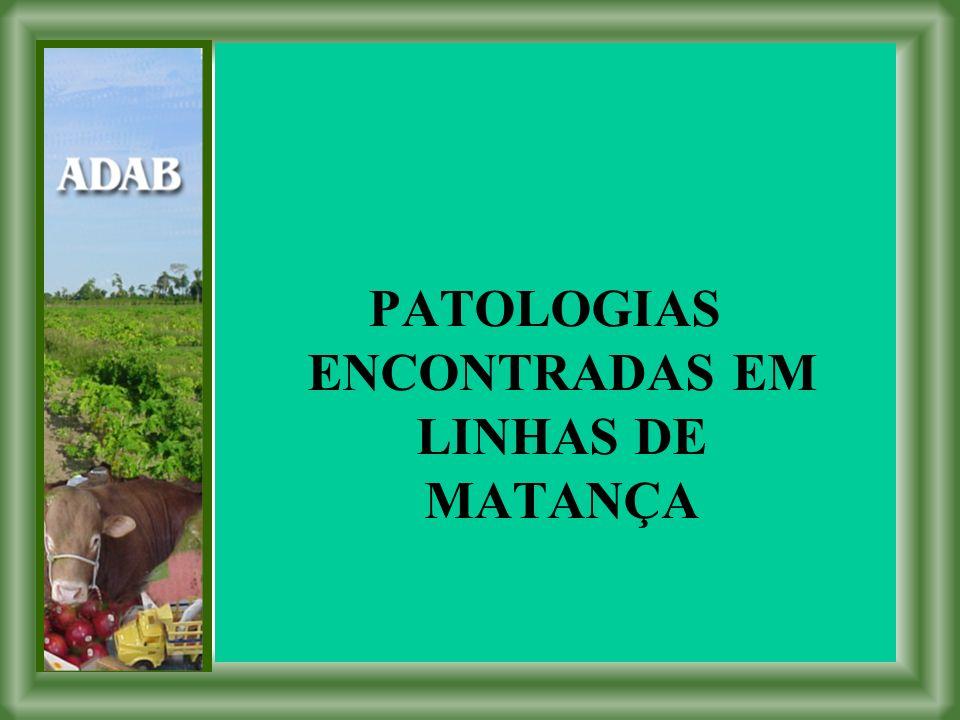 PATOLOGIAS ENCONTRADAS EM LINHAS DE MATANÇA