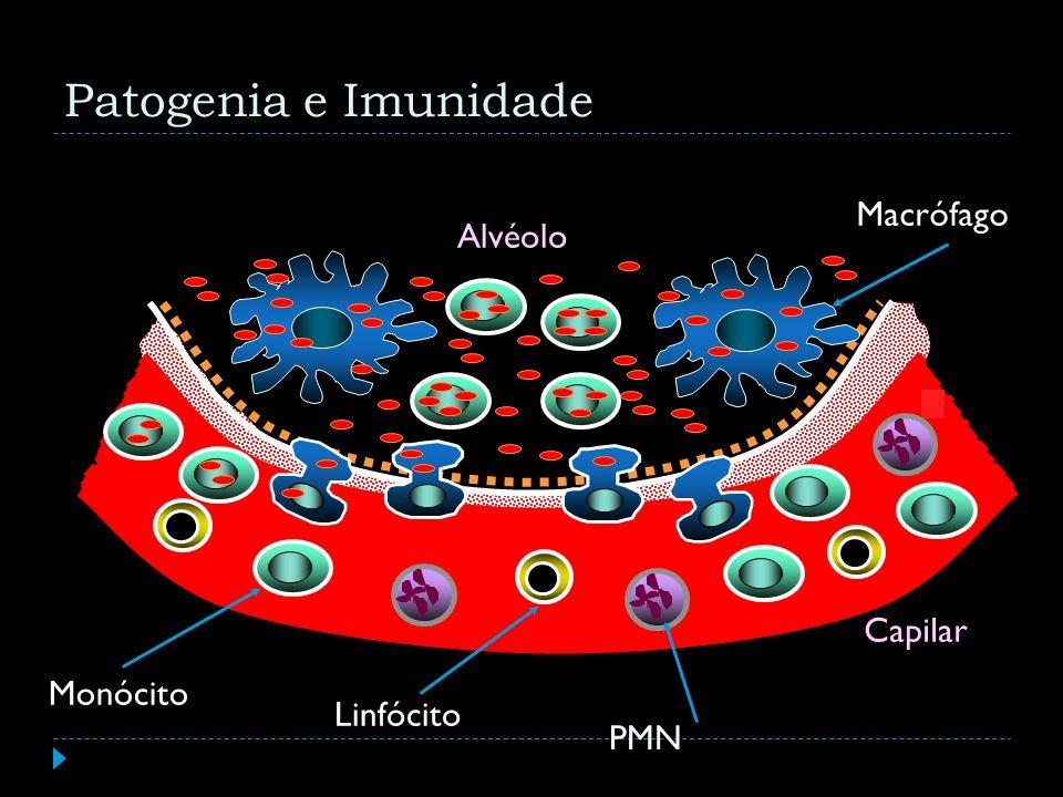 Patogenia e Imunidade Alvéolo Capilar Macrófago PMN Monócito Linfócito