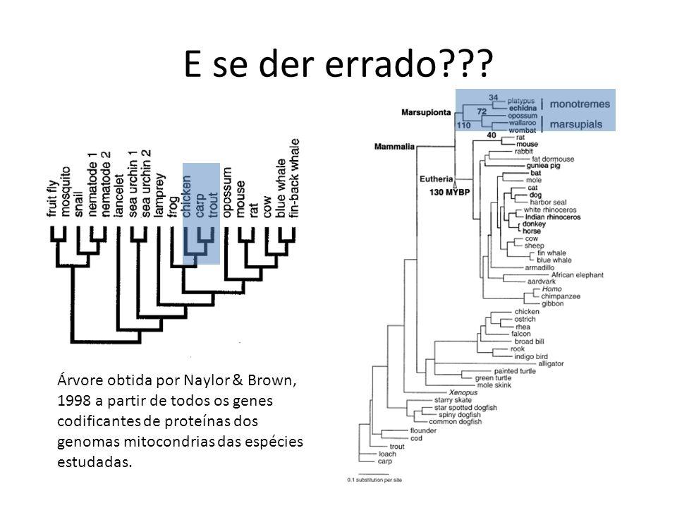 E se der errado??? Árvore obtida por Naylor & Brown, 1998 a partir de todos os genes codificantes de proteínas dos genomas mitocondrias das espécies e