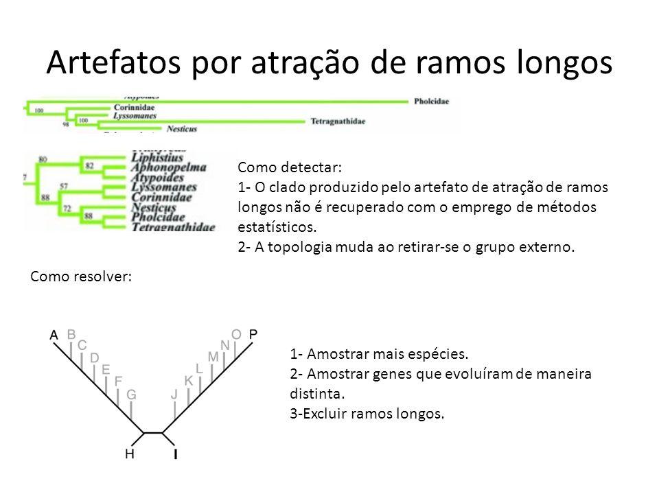 Artefatos por atração de ramos longos Como detectar: 1- O clado produzido pelo artefato de atração de ramos longos não é recuperado com o emprego de m
