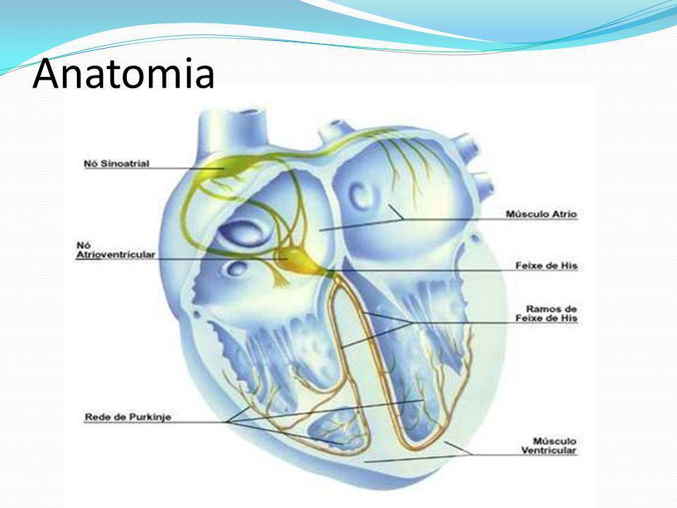 Complexo QRS Onda R (2ª fase de despolarização ventricular) Positiva em DII.
