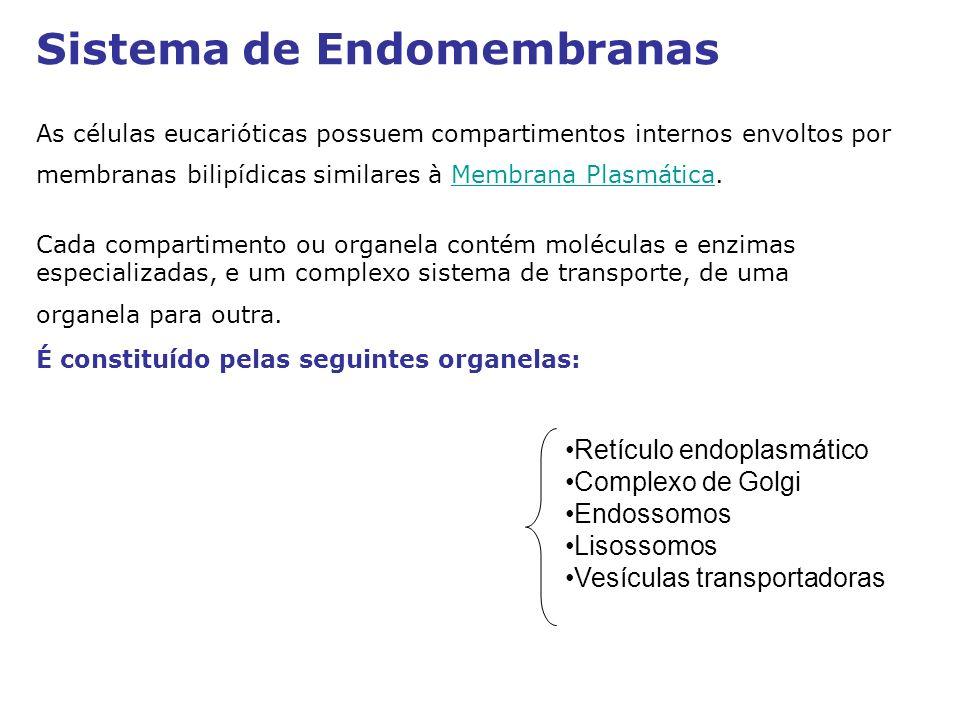 Retículo endoplasmático Complexo de Golgi Endossomos Lisossomos Vesículas transportadoras Sistema de Endomembranas As células eucarióticas possuem com