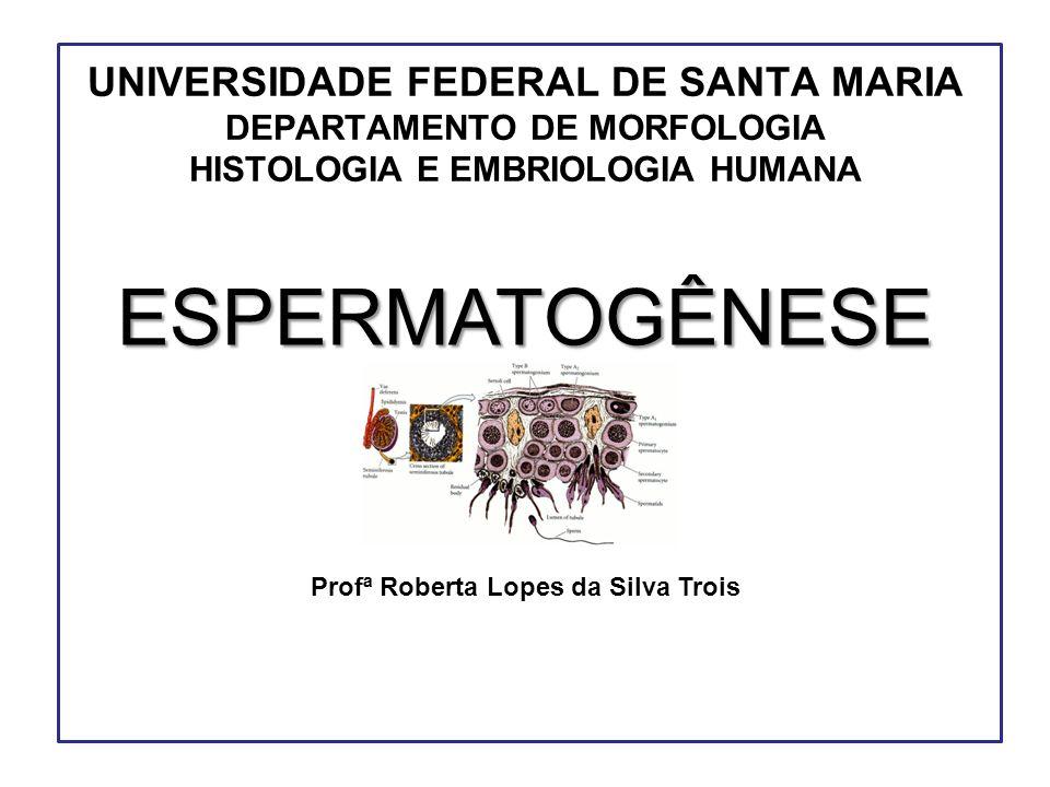 UNIVERSIDADE FEDERAL DE SANTA MARIA DEPARTAMENTO DE MORFOLOGIA HISTOLOGIA E EMBRIOLOGIA HUMANA ESPERMATOGÊNESE Profª Roberta Lopes da Silva Trois