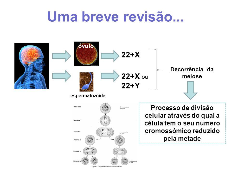 Uma breve revisão... óvulo espermatozóide 22+X 22+X ou 22+Y Decorrência da meiose Processo de divisão celular através do qual a célula tem o seu númer