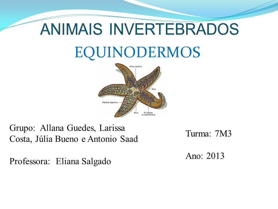 EQUINODERMOS Grupo: Allana Guedes, Larissa Costa, Júlia Bueno e Antonio Saad Professora: Eliana Salgado Turma: 7M3 Ano: 2013