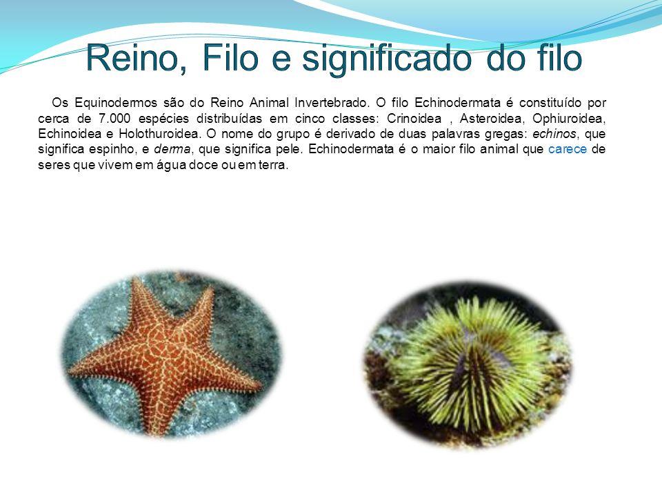 Alimentação e relação com o ser humano e o ambiente Os equinodermos se alimentam de pequenos animais e algas.