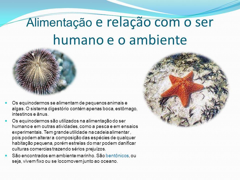 Alimentação e relação com o ser humano e o ambiente Os equinodermos se alimentam de pequenos animais e algas. O sistema digestório contém apenas boca,