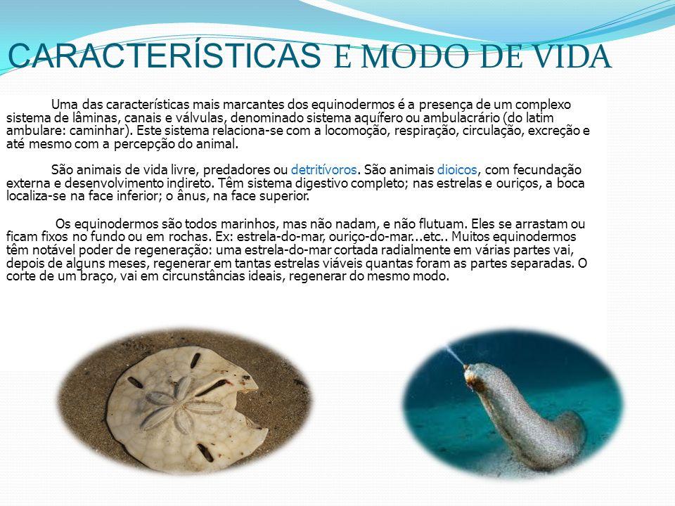 Reprodução e Curiosidades Reprodução A reprodução dos Equinodermos pode ser sexuada ou por regeneração.