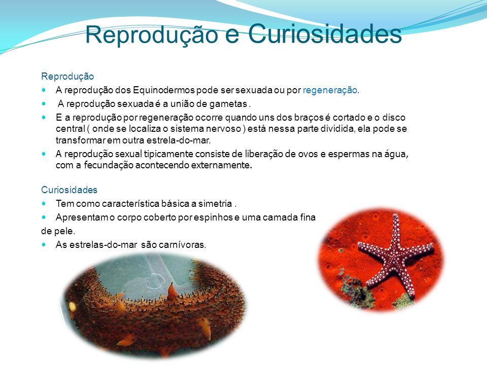 Reprodução e Curiosidades Reprodução A reprodução dos Equinodermos pode ser sexuada ou por regeneração. A reprodução sexuada é a união de gametas. E a