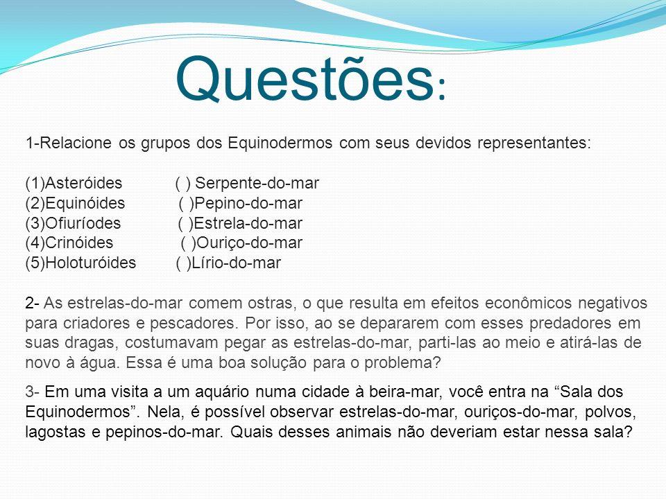 Questões : 1-Relacione os grupos dos Equinodermos com seus devidos representantes: (1)Asteróides ( ) Serpente-do-mar (2)Equinóides ( )Pepino-do-mar (3