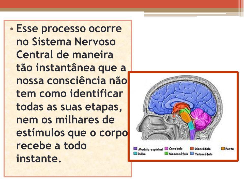 Esse processo ocorre no Sistema Nervoso Central de maneira tão instantânea que a nossa consciência não tem como identificar todas as suas etapas, nem