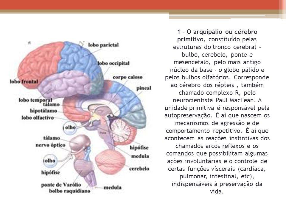1 - O arquipálio ou cérebro primitivo, constituído pelas estruturas do tronco cerebral - bulbo, cerebelo, ponte e mesencéfalo, pelo mais antigo núcleo