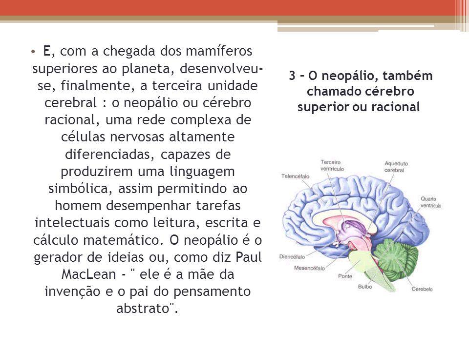 3 – O neopálio, também chamado cérebro superior ou racional E, com a chegada dos mamíferos superiores ao planeta, desenvolveu- se, finalmente, a terce