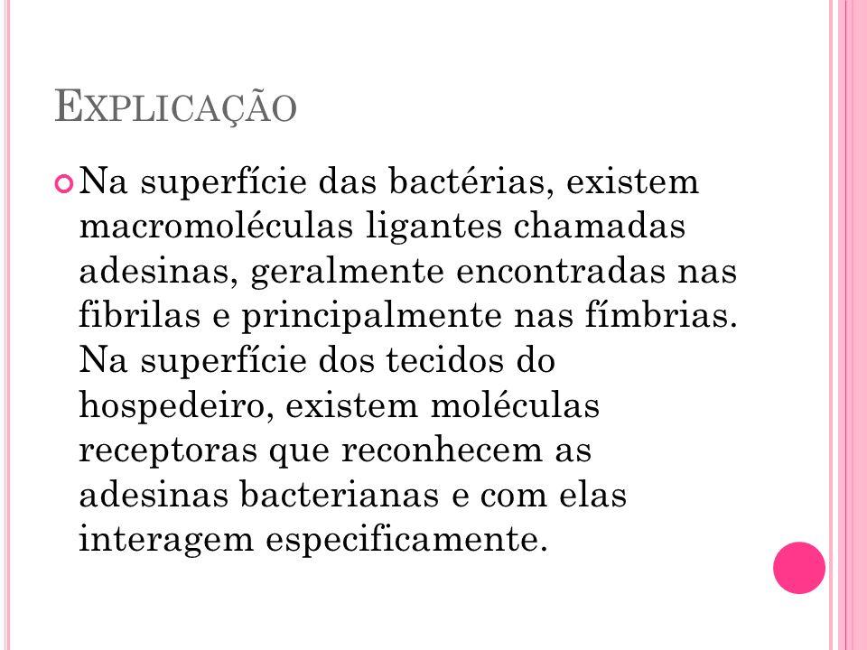 E XPLICAÇÃO Na superfície das bactérias, existem macromoléculas ligantes chamadas adesinas, geralmente encontradas nas fibrilas e principalmente nas f