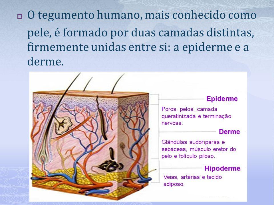 O tegumento humano, mais conhecido como pele, é formado por duas camadas distintas, firmemente unidas entre si: a epiderme e a derme.