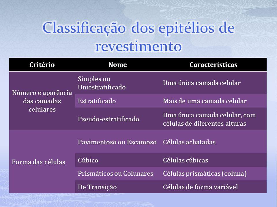 CritérioNomeCaracterísticas Número e aparência das camadas celulares Simples ou Uniestratificado Uma única camada celular EstratificadoMais de uma cam