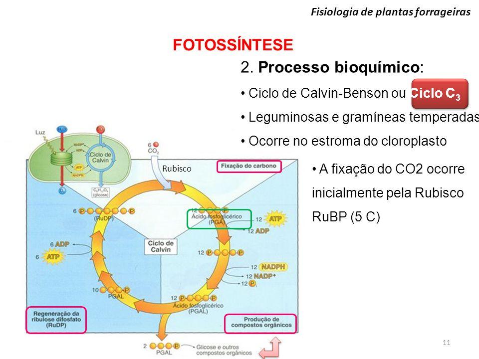 Fisiologia de plantas forrageiras FOTOSSÍNTESE 11 2. Processo bioquímico: Ciclo de Calvin-Benson ou Ciclo C 3 Leguminosas e gramíneas temperadas Ocorr