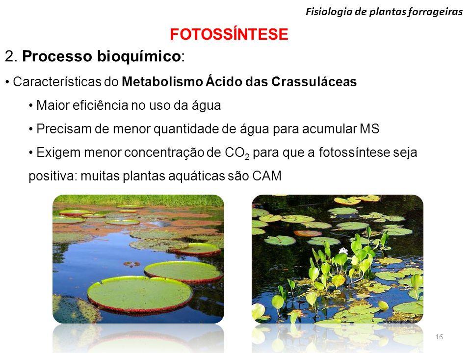 Fisiologia de plantas forrageiras FOTOSSÍNTESE 16 2. Processo bioquímico: Características do Metabolismo Ácido das Crassuláceas Maior eficiência no us